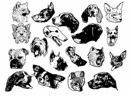 simsearch:400-04399778,k - vector - dog head isolated on background Stock Photo - Budget Royalty-Free & Subscription, Code: 400-04792078