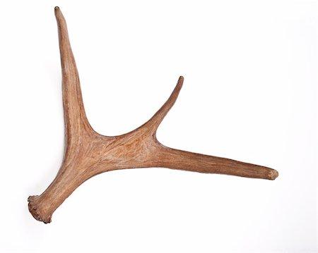 deer hunt - Horn of deer Stock Photo - Budget Royalty-Free & Subscription, Code: 400-04815525