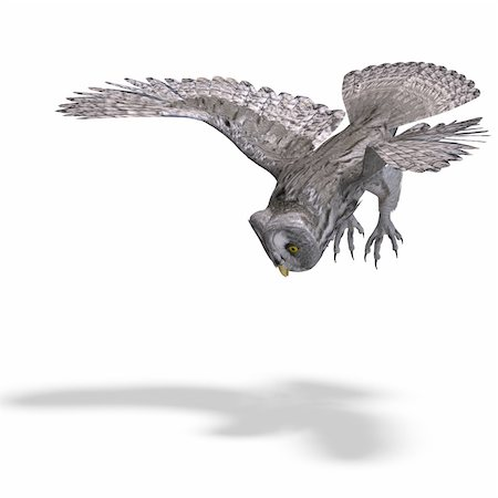 Grey Owl Bird. 3D rendering with clipping path and shadow over white Stock Photo - Budget Royalty-Free & Subscription, Code: 400-04811914