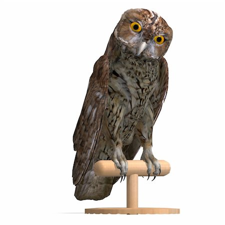 Tawny Owl Bird. 3D rendering with clipping path and shadow over white Stock Photo - Budget Royalty-Free & Subscription, Code: 400-04813763