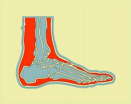 human foot Stock Photo - Budget Royalty-Free & Subscription, Code: 400-04821544