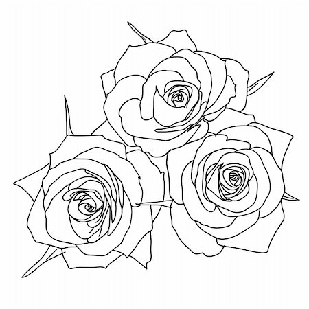 Three Roses in hand drawn style Stock Photo - Budget Royalty-Free & Subscription, Code: 400-04839001