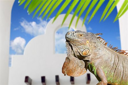 Mexican iguana white archs house blue sky in traditional Mexico Stock Photo - Budget Royalty-Free & Subscription, Code: 400-04833092