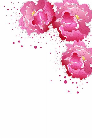 peony illustrations - beautiful blossom pink peony on white background Stock Photo - Budget Royalty-Free & Subscription, Code: 400-04845575