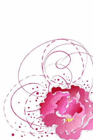 peony illustrations - beautiful blossom pink peony on white background Stock Photo - Budget Royalty-Free & Subscription, Code: 400-04845576