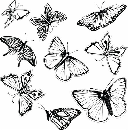 Set of black and white vector butterflies Stock Photo - Budget Royalty-Free & Subscription, Code: 400-04856898