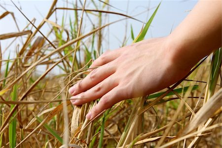 close up of a man's hand touching the grass, 'feeling nature Stock Photo - Budget Royalty-Free & Subscription, Code: 400-04857248