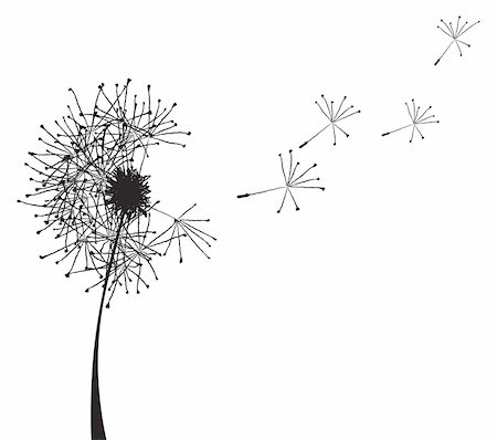 florist vector - Vector illustration of a dandelion outline loosing its fuzzes Stock Photo - Budget Royalty-Free & Subscription, Code: 400-04859914
