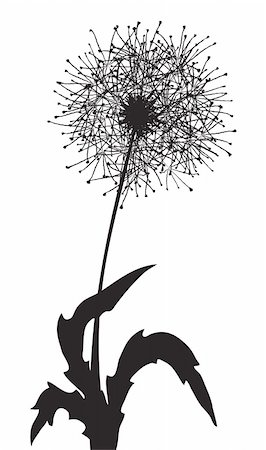 simsearch:400-04367218,k - Vector illustration of a fluffy dandelion outline Stock Photo - Budget Royalty-Free & Subscription, Code: 400-04859915