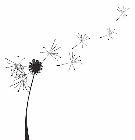 florist vector - Vector illustration of a dandelion outline with fuzzes flying off it Stock Photo - Budget Royalty-Free & Subscription, Code: 400-04859916