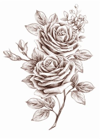 Old-styled rose. Freehand drawing Stock Photo - Budget Royalty-Free & Subscription, Code: 400-04852002