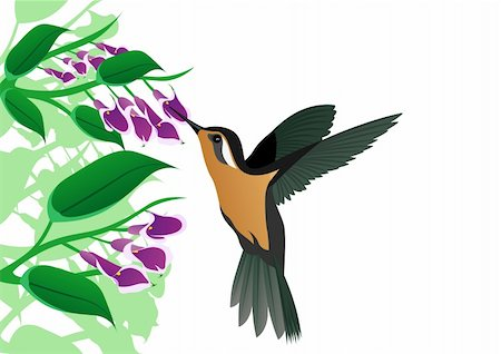 flower drawings black - A little bird-drinking nectar from flowers Stock Photo - Budget Royalty-Free & Subscription, Code: 400-04852772