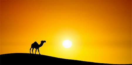 Camel at sunset Stock Photo - Budget Royalty-Free & Subscription, Code: 400-04867519