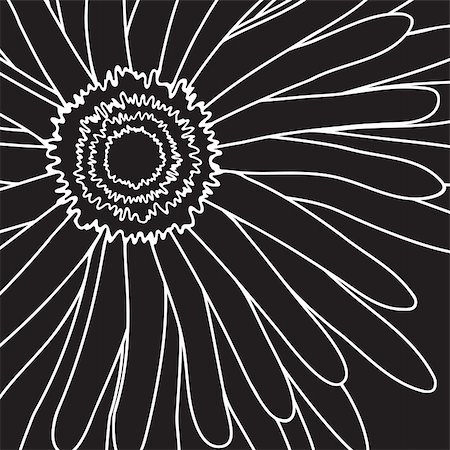 simsearch:400-04367215,k - Vector illustration of white drawing gerbera on a black background Stock Photo - Budget Royalty-Free & Subscription, Code: 400-04860936