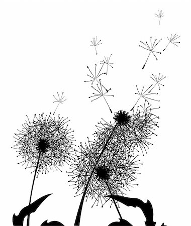 florist vector - Vector illustration of silhouettes fluffy summer dandelions Stock Photo - Budget Royalty-Free & Subscription, Code: 400-04860937