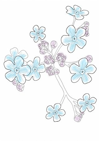 simsearch:400-04367215,k - Vector illustration of beautiful blue forget-me-nots Stock Photo - Budget Royalty-Free & Subscription, Code: 400-04861058