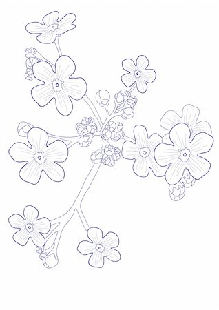 simsearch:400-04367215,k - Vector illustration of beautiful wildflower - forget me nots Stock Photo - Budget Royalty-Free & Subscription, Code: 400-04861060