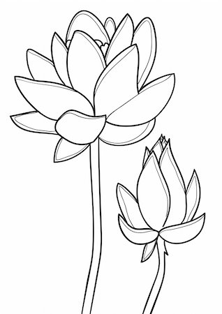 black and white vector image of lotus flower Stock Photo - Budget Royalty-Free & Subscription, Code: 400-04861576