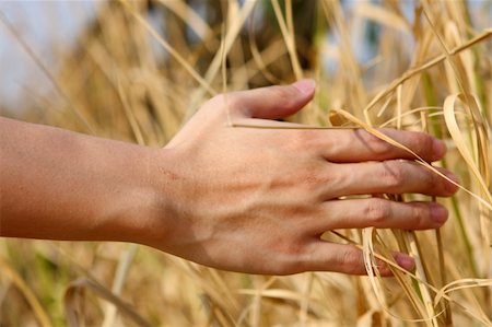 close up of a man's hand touching the grass, 'feeling nature Stock Photo - Budget Royalty-Free & Subscription, Code: 400-04861757