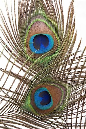 Detail of peacock feather eye on white background Stock Photo - Budget Royalty-Free & Subscription, Code: 400-04875331