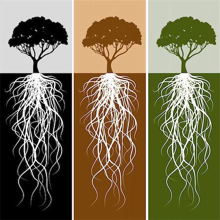 An image of a vertical tree root banner set. Stock Photo - Budget Royalty-Free & Subscription, Code: 400-04873405