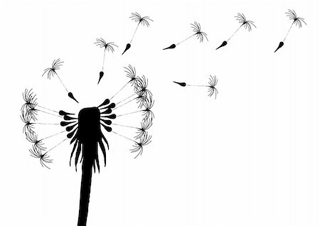 florist vector - Vector illustration of blowing dandelion on a white background Stock Photo - Budget Royalty-Free & Subscription, Code: 400-04873693