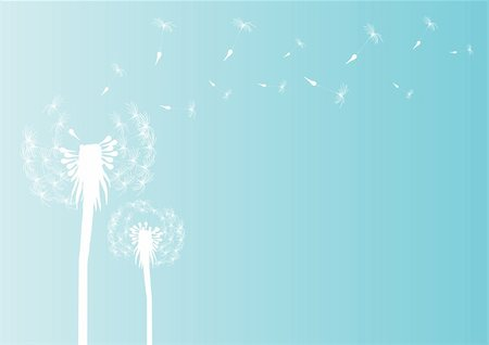 florist vector - Vector illustration of blowing dandelion silhouette on blue background Stock Photo - Budget Royalty-Free & Subscription, Code: 400-04873702