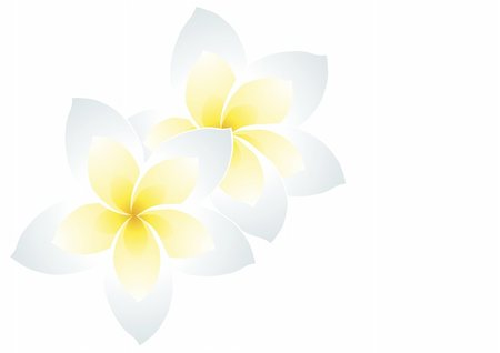 flores - Vector illustration of two white frangipani Stock Photo - Budget Royalty-Free & Subscription, Code: 400-04873732