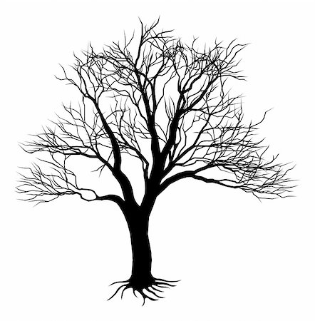 An illustration of a scary bare black tree silhouette Stock Photo - Budget Royalty-Free & Subscription, Code: 400-04907402
