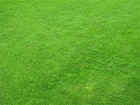 Beautiful green lawns perfectly cut for background Stock Photo - Budget Royalty-Free & Subscription, Code: 400-04917679