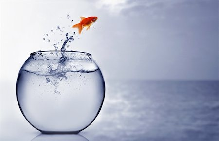 Goldfish jumping into the sea Stock Photo - Budget Royalty-Free & Subscription, Code: 400-04925404