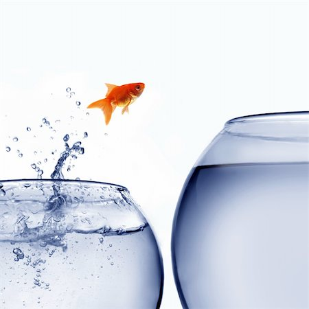 goldfish jumping out of the water Stock Photo - Budget Royalty-Free & Subscription, Code: 400-04925405
