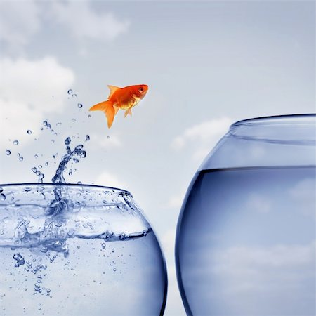 goldfish jumping out of the water Stock Photo - Budget Royalty-Free & Subscription, Code: 400-04925406