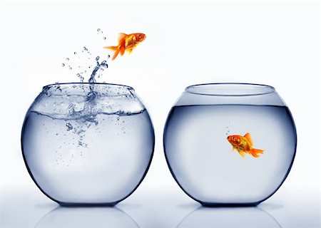 goldfish jumping out of the water Stock Photo - Budget Royalty-Free & Subscription, Code: 400-04925407
