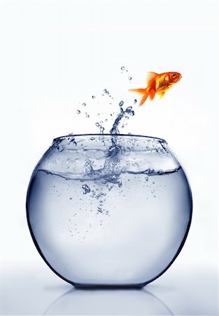 goldfish jumping out of the water Stock Photo - Budget Royalty-Free & Subscription, Code: 400-04925408
