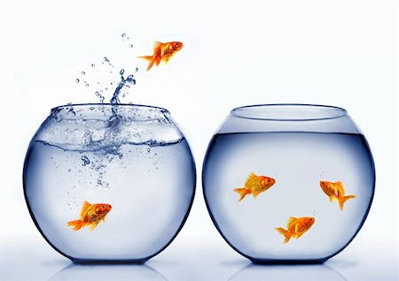 goldfish jumping out of the water Stock Photo - Budget Royalty-Free & Subscription, Code: 400-04926221