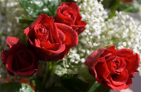 dozen roses - Close-up of red roses Stock Photo - Budget Royalty-Free & Subscription, Code: 400-04939489