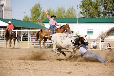 Steer wrestling at a local small town rodeo Stock Photo - Budget Royalty-Free & Subscription, Code: 400-05010899