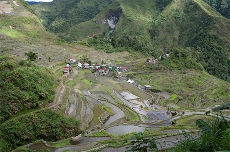 philippine terrace farming - rice terraces in northern luzon the philippines Stock Photo - Budget Royalty-Free & Subscription, Code: 400-05044040
