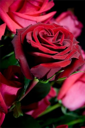 dozen roses - beautiful red roses bouquet closeup Stock Photo - Budget Royalty-Free & Subscription, Code: 400-05099424