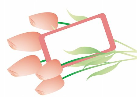 simsearch:400-04367215,k - Bouquet with pink tulips on white background. You can put in your text. Stock Photo - Budget Royalty-Free & Subscription, Code: 400-05091750