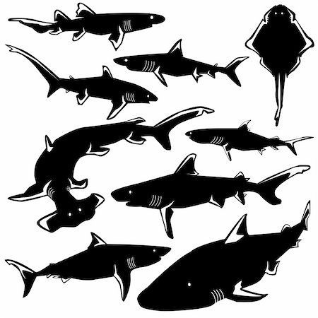 Dangerous sharks in vector silhouette with stylized illustration Stock Photo - Budget Royalty-Free & Subscription, Code: 400-05128362