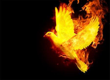 pickbest - isolated burning phoenix bird on the black background Stock Photo - Budget Royalty-Free & Subscription, Code: 400-05128887