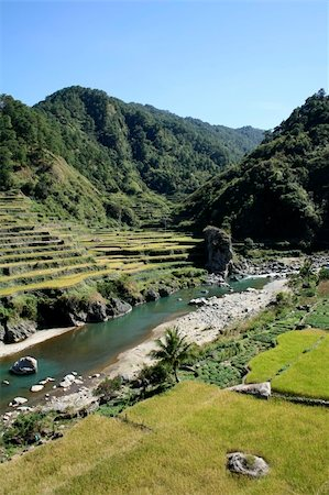 philippine terrace farming - vegetables and rice being grown on steep valey sides of central cordillera northern luzon the philippines Stock Photo - Budget Royalty-Free & Subscription, Code: 400-05134352