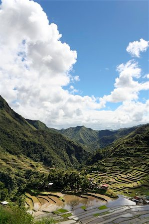 philippine terrace farming - clouds towering in blue sky reflected in the ancient rice terraces of batad, in northern luzon, the philippines Stock Photo - Budget Royalty-Free & Subscription, Code: 400-05134648