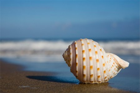 spanishalex (artist) - Nice pale seashell lying on a beach with nice blue sky and water Stock Photo - Budget Royalty-Free & Subscription, Code: 400-05172858
