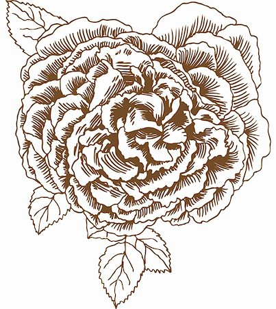 Blossomed flower (rose) with leaves in a hand drawn style. Stock Photo - Budget Royalty-Free & Subscription, Code: 400-05182160