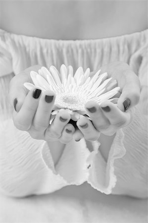 Black and white photo of a girls hands holding a gerbera Stock Photo - Budget Royalty-Free & Subscription, Code: 400-05204270