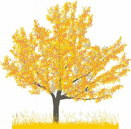 Vector illustration of cherry tree in autumn Stock Photo - Budget Royalty-Free & Subscription, Code: 400-05200584