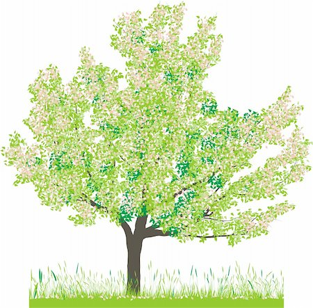 Vector illustration of cherry tree in spring Stock Photo - Budget Royalty-Free & Subscription, Code: 400-05200585